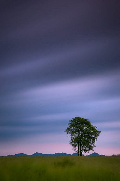 Tree - Long exposure
